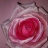 Nachtkurier Rose
